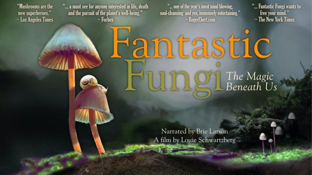 """Il documentario """"Fantastic Fungi"""" e il potenziale ruolo dei funghi nella guarigione collettiva."""